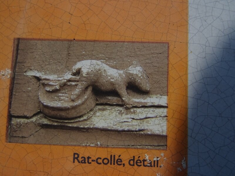 Moret rat-collé