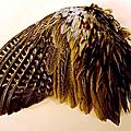 Compte-rendu : l'adaptation au vol des oiseaux et des mammifères