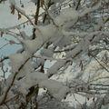 neige 12/08