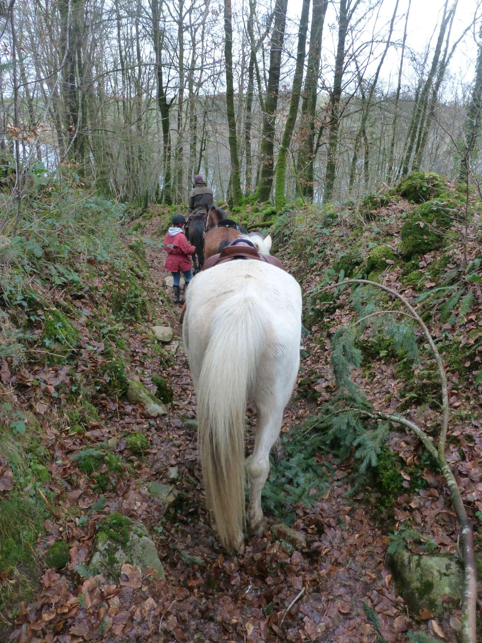 Balade à cheval dans la forêt P1080290
