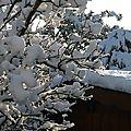 La beauté du soleil sur la neige..