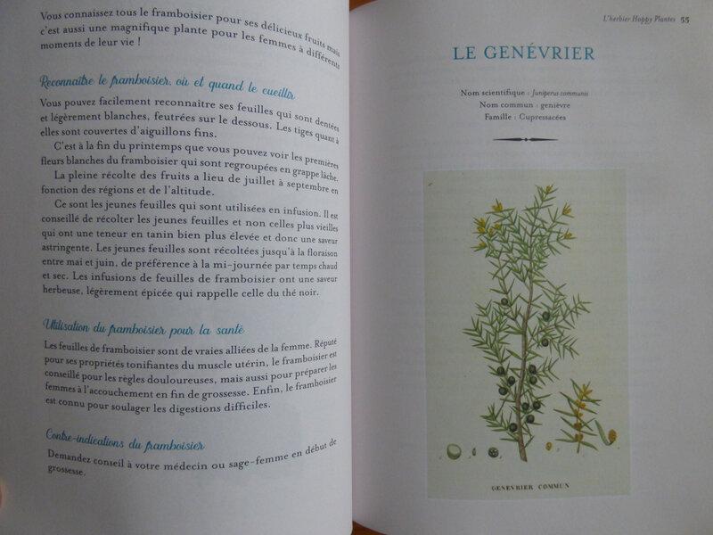 Happy plantes (2)