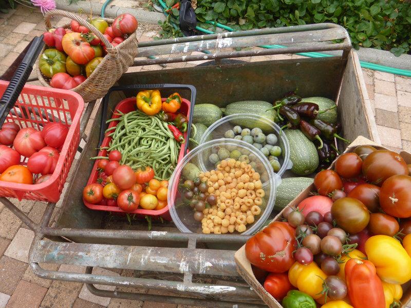 28-récoltes du jour- (4)