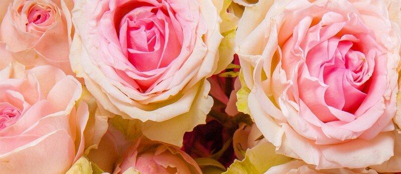 Ingrédient-rose-parfum