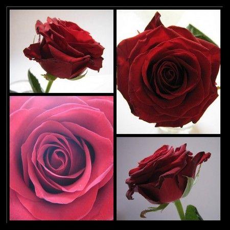 Mosaïque rose rouge