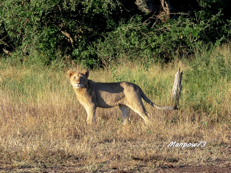 South Africa - 244