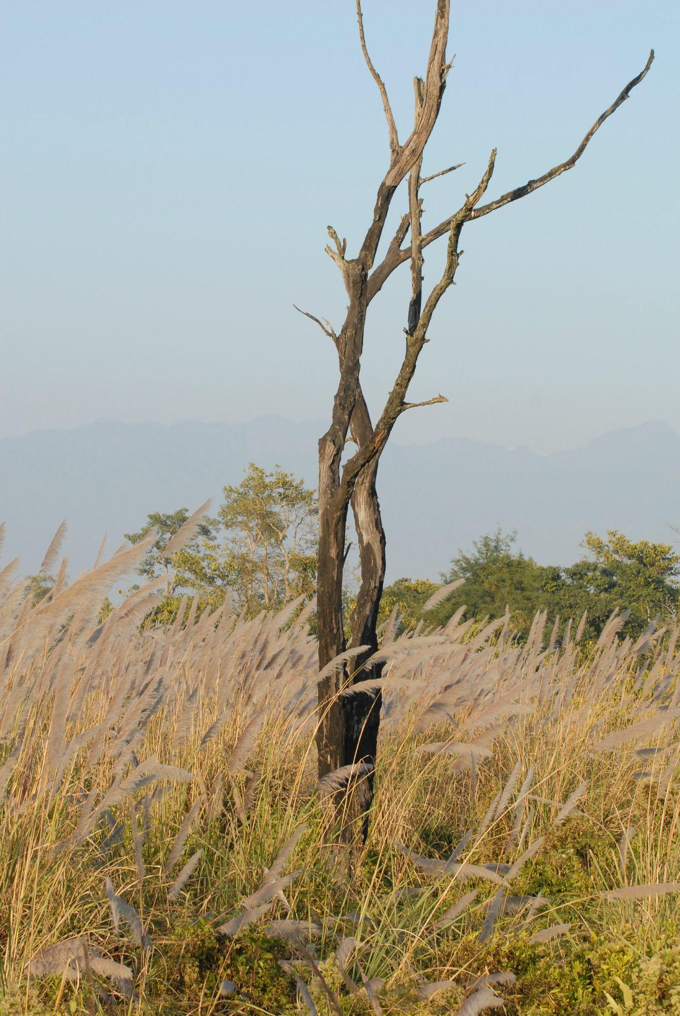 savane à Chitwan