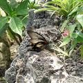 papillorama avril 09