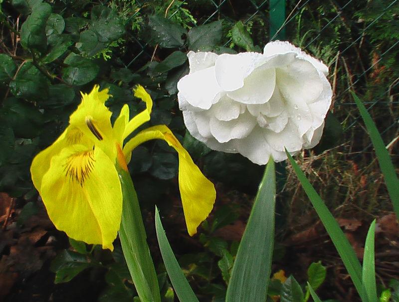 fleurs 082
