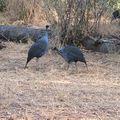 2010-02-23 Samburu (33)