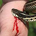 Remède pour se préserver contre la morsure du serpent-medium marabout voyant sérieux ayao