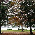 Vielle automne 2410155
