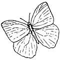 Diy - des papillons de papier !