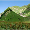 Rumex alpin Vers pointe d'Almet
