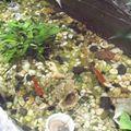 Le bassin et ses poissons