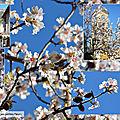 Publication du goodie de décembre / noël et calisson / joie de vivre, vitalité, régénération / elixir floral : l'amandier