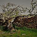 Abbey trail selkirk - melrose, borders
