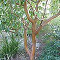 Un tronc du plus beau rouge