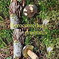 Xerocomellus pruinatus