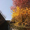 Fleurs à saint-chamond