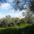 la colline des muses (2)