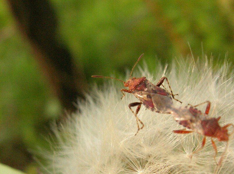 insecte au printemps
