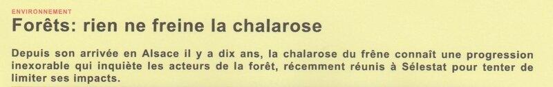 chalarose