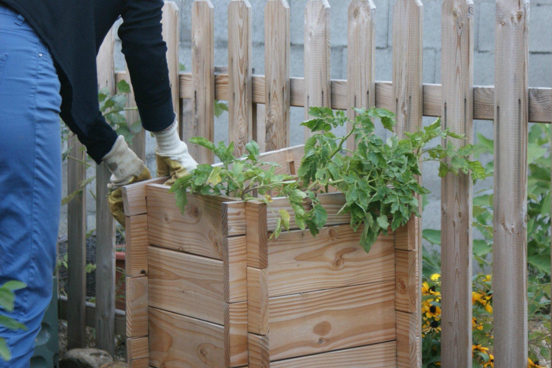Potager 3 Etages Botanic la tour à patates #3 - fin du test - 2013 - une brindille au