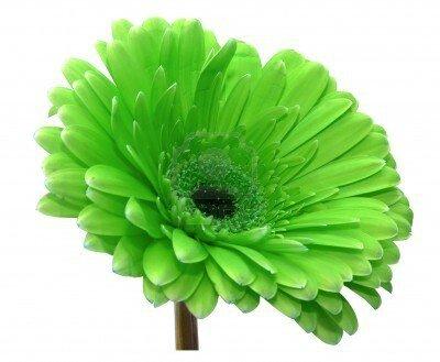 8708357-fleur-verte