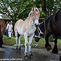 Z-9844 Concours chevalin à Arnèke 14 juillet 2014