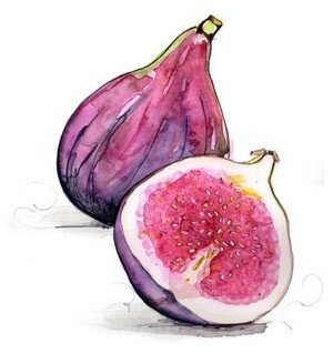 figues 1