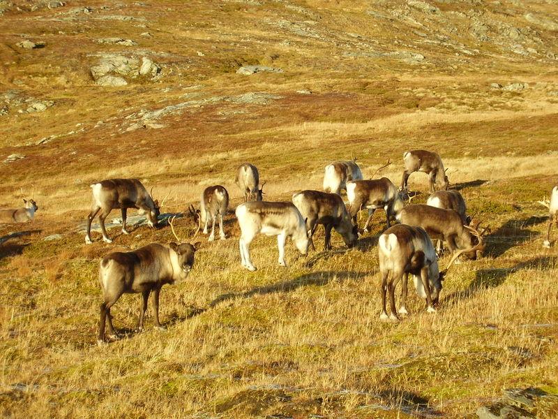 17-10-08 Sortie Montagne et rennes (128)