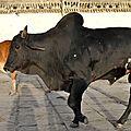 Inde-923