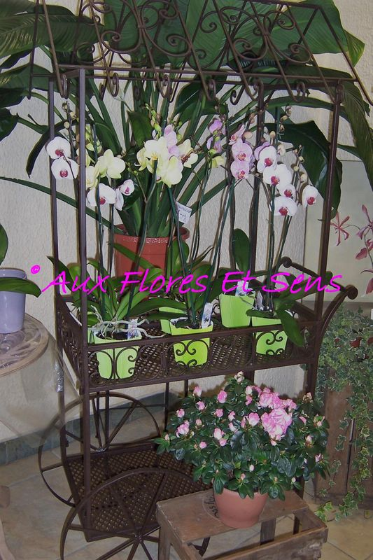Phalaenopsis, azalée...