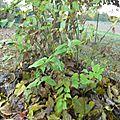 autre paillis végétal