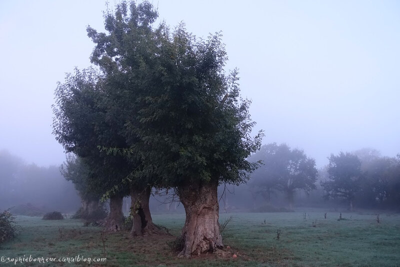 octobre brume