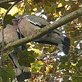 Deux pigeons s'aimaient d'amour tendre