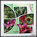 Jardin de mimou - clématite princess diana