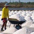 ramasseur de sel