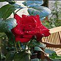 Des roses, des roses, des roses...