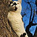Le chat-chou