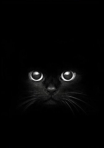 chat noir regard noir