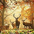 cerf foret automne6_5460460_n