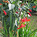 CROCOSMIAS 2