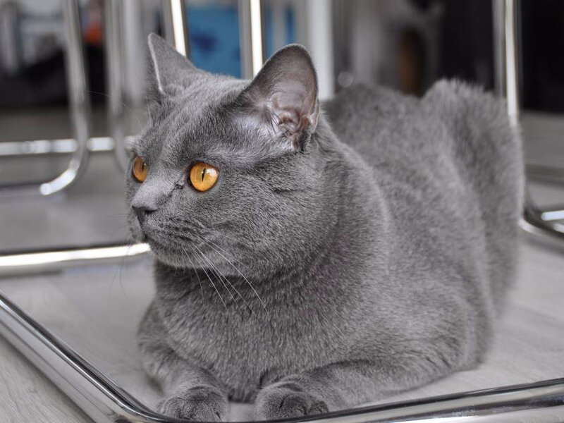 _light-351863-le-chartreux