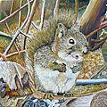 Un écureuil,