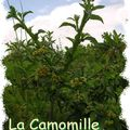 camomille_diaporama