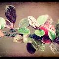 automne_4