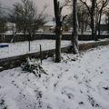 2009 12 01 Première neige dans le jardin