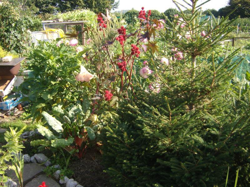 jardins ouvriers 031